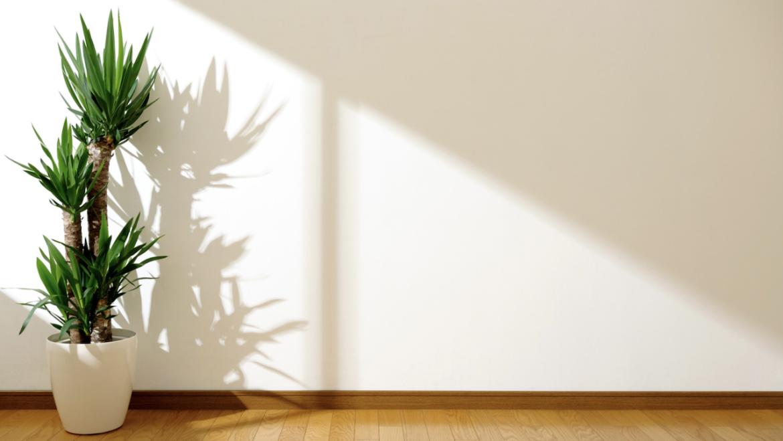 A importância da exposição solar na sua casa